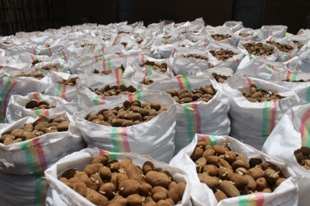Biofortified potatoes for better nutrition, East Africa