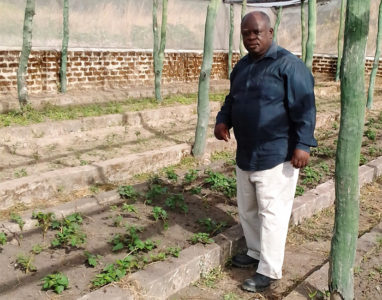 Chiona in one of the trial screenhouses where sweetpotato varieties are grown (photo: ZARI)