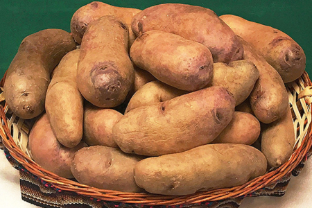 Scientists working on frost-resistant potatoes in Peru